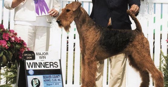 Bentley Airedale