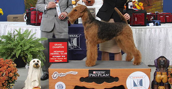 Dixie Airedale
