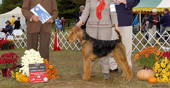 Jake Airedale