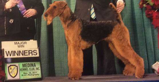 Mercedes Airedale