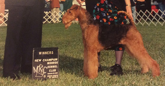Mercy Airedale